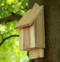 Chavenage Bat Box - on tree