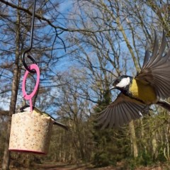 Jacobi Jayne Easy Peasy Bird Food Cakes - Nutty, Buggy and Berry