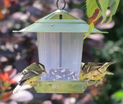 Eco Beacon Bird Feeder - birds