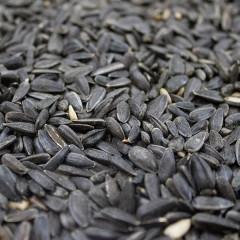 Love Garden Birds Black Sunflower Seed