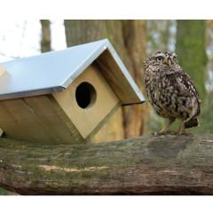 Fallen Fruits Little Owl Box - owl