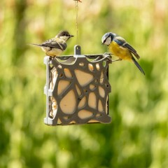 National Trust Anna Recycled Suet Cake Feeder - lifestyle
