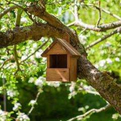 Robin Nest Box Dark Wood
