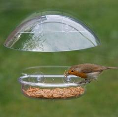 I love Robins Window Feeder - lifestyle