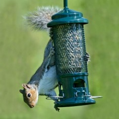 Brome Squirrel Buster Standard Seed Feeder