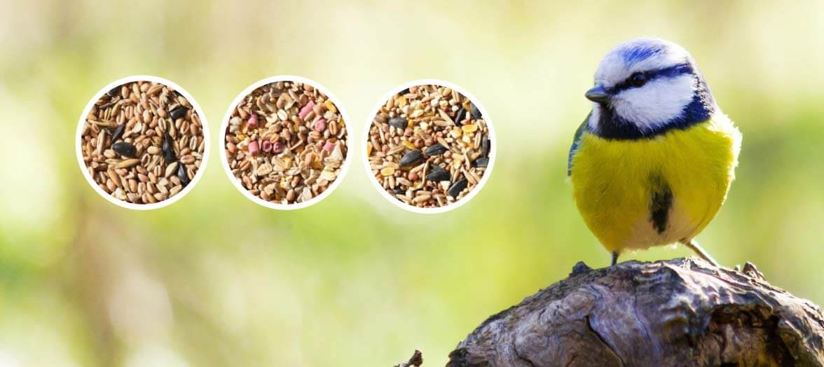 Blue tit banner for Seed Mixes